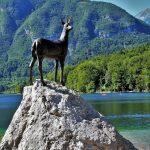 Nájdite krásu a cestujte k Bohinjskému jazeru