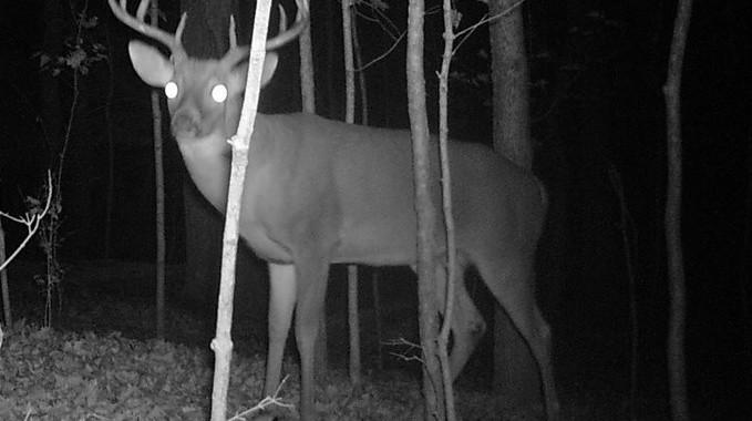 Rýchle tipy na lov s nočným videním